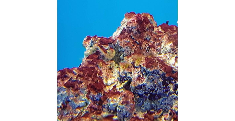 https://morskiakvarium.bg/image/cache/catalog/blog/cyano-in-reef-aquarium/cyano-reef-aquarium-1170x600.jpg