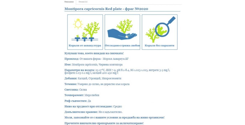 https://morskiakvarium.bg/image/cache/catalog/blog/opisanie-korali/opisanie-korali-1-1170x600.jpg