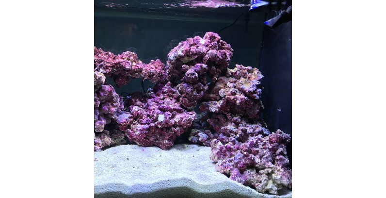 """Real Reef Rock – изкуството да създаваш """"живи камъни"""""""