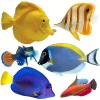 Риби в наличност