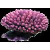 Твърди корали (Hard corals)