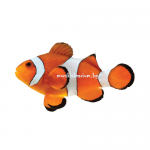 Amphiprion ocellaris - размер S